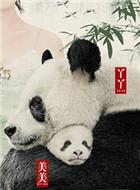 大熊猫美美